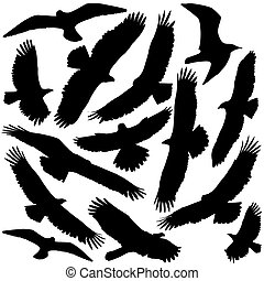 Predator Silhouette - Hawk and Falcon and Eagle vector...