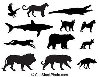 Predators - Vector illustration of various predator animal ...
