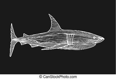 Predatory fish shark sketch illustration to engraving style