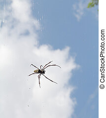 Predatory tropical spider hanging on its web waiting for prey