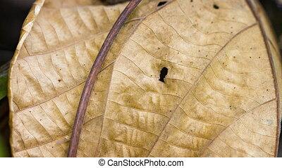 Predatory wasp on a dry leaf. Thailand.