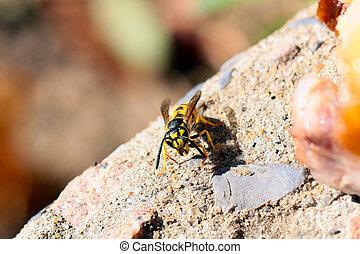 wild dangerous wasp