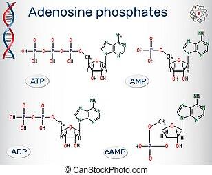 predios, fórmulas, :, monophosphate, (amp), diphosphate,...
