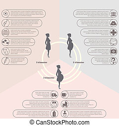 Pregnancy and birth infographics, pregnancy stages - ...