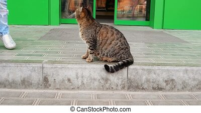 Pregnant Cat In Front Of The Mall Door - Pregnant Cat In...