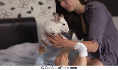 Pregnant Mother laying with her baby son and chinchilla animal on the bedroom bed playing and having fun - Asian mixed ethnicity child Boy wearing blue body shirt with smiling bear cartoon