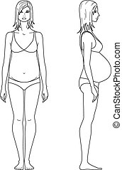 Pregnant woman - Vector illustration of pregnant womens...