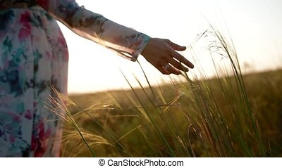 Pregnant woman touch the spikelets