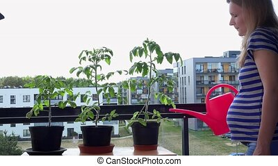 pregnant woman wife water plants flowers with watering can in flat house balcony