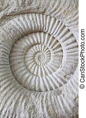 prehistórico, fósil de la amonita