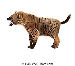 prehistórico, hiena, ilustración