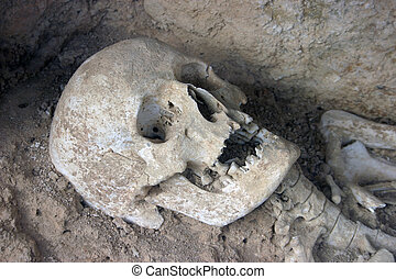 Prehistoric skull - Excavated archeological skull.