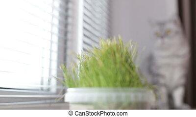premier plan, séance, foyer, chat, fenêtre, vert, adulte, fond, herbe, dehors, regarde