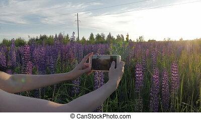 prend, elle, lupin, téléphone., photo, girl, fleurs