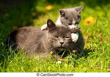 prensas, el suyo, abrazos, cara, gatito, gato