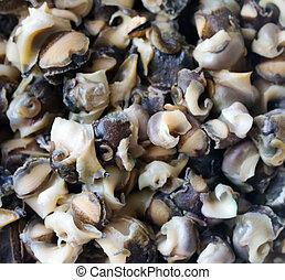 preparado, extracted, asado, mar, caracoles, (rapana)