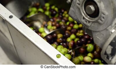 preparation of olive's centrifugation