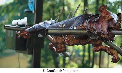 Preparation of whole pig on a spit. The roasting of the pig on the coals. The food in the fresh air