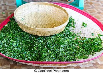 preparation processing of fresh green tea on the plantation. selective focus