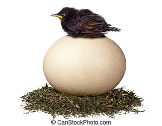 A little bird sits in vain on a large egg waiting for it to hatch. It is a futile exercise.