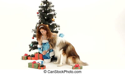 Preparing a dog for New Year