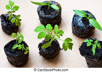 Preparing for the cultivation of plants in the garden