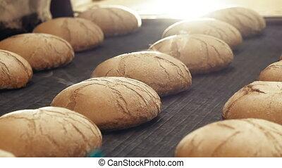 Preparing loafs of wheat bread on conveyer in bakery. Full...
