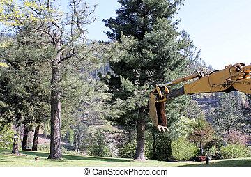Preparing to Cut a Tree Down