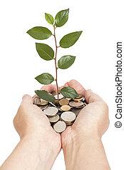 presa a terra, albero, crescente, monete, mano
