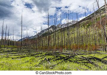 prescritto, bruciatura, in, uno, foresta boreale, -, banff parco nazionale
