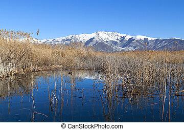 prespes, lago, em, norte, grécia