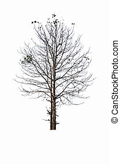 presque, arbre, mort
