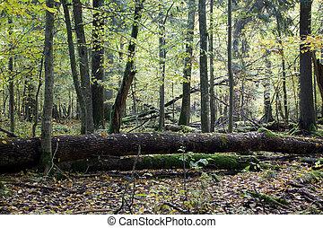presque, arbres, cassé, automne, décliné