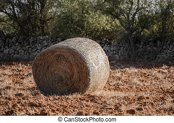 Pressed bale of hay on a field