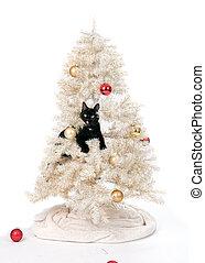 pretas, árvore, natal, gato