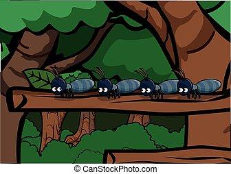 pretas, ao redor, formigas, floresta