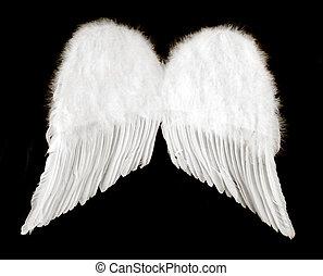 pretas, asas, anjo, isolado
