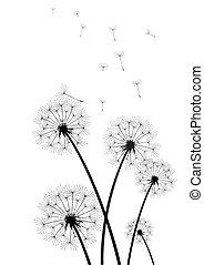 pretas, branca, vetorial, dandelions