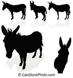 pretas, burro, silueta