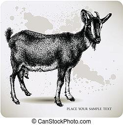 pretas, cabra, com, chifres, hand-drawing