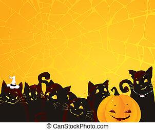 pretas, dia das bruxas, fundo, gato