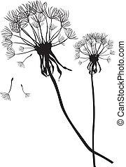 pretas, dois, vetorial, dandelions