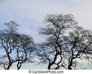pretas, inverno árvore, tempo