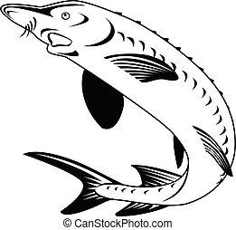 pretas, oxyrinchus, acipenser, ou, branca, retro, atlântico...