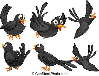 pretas, pássaros