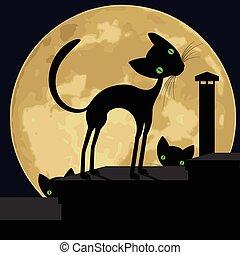 pretas, roof., gato