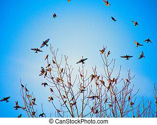 pretas, silhuetas, de, pássaros voando