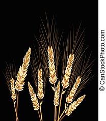 pretas, trigo, isolado
