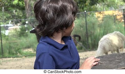 Preteen Hispanic Boy at Zoo