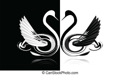 preto branco, cisne